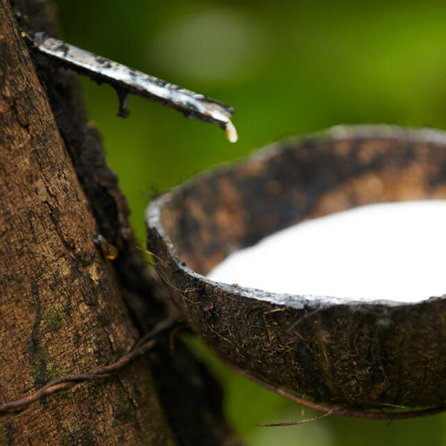 Stakeholders-launch-Global-Platform-for-Sustainable-Natural-Rubber_i1140